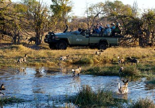 Game Drive From Splash Camp