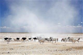 Dust Cloud In Etosha National Park - Yathin Krishnappa