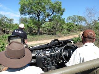 Safari Jump Seat
