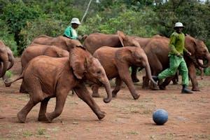 Nairobi Elephant Orpahnage