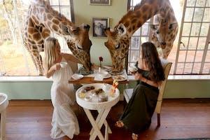 1 A  Giraffe  Manor  Dining