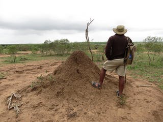 Our Guide Taught Us About Termite Mounds