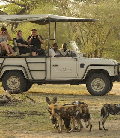 Wild Dogs Game Drive