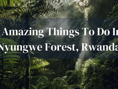 5 Amazing Things To Do In Nyungwe Forest