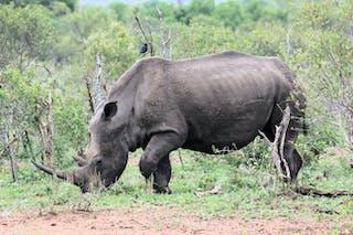 We Saw White And Black Rhino At Mkhaya
