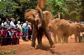 Elephant dust bath!