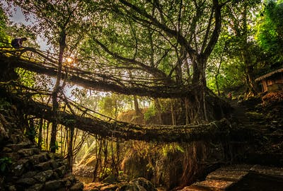 A Living Root Bridge