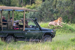 Angama Mara Angama Safari In Action