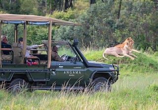 Angama  Mara  Angama  Safari  In  Action