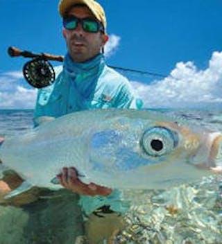 Alphonse Milk Fish