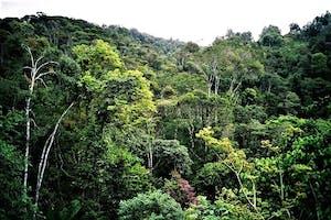 Andasibe Rainforest
