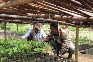Association Mitsinjo Reforestation Scheme