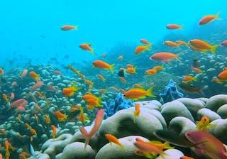 Azura Quilalea Private Island Colourful Fish And Coral