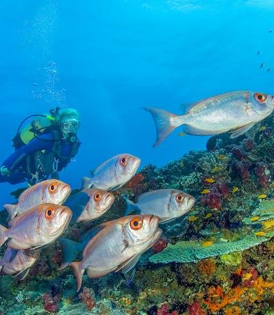 Azura Quilalea Diving 3 Copy