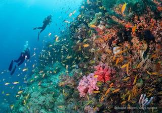 Azura Quilalea Reef Diving