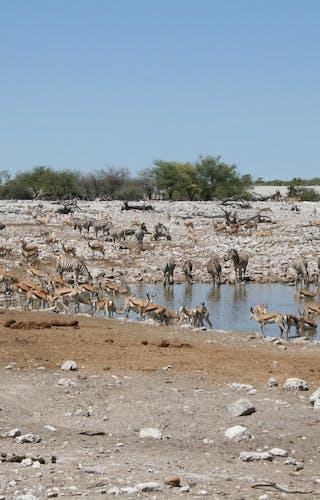 Busy Waterhole Etosha - Margo