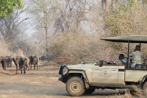 Baines River Camp Game Drive
