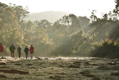 Bale Mountains Np Harenna Visitors Morning