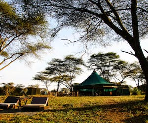 Banagi Green Camp In The Central Serengeti