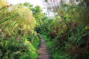 Bigodi Wetland Sanctuary Bigodi Tourism Uganda
