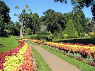 Botanical Garden Of Peradeniya By Bernard Gagnon Creative Commons