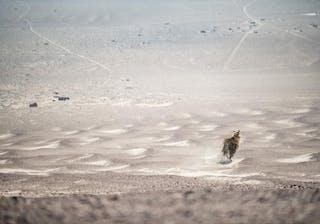 Brown Hyena Shipwreck Lodge