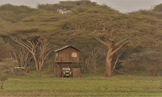 Bush Rover In The Bush