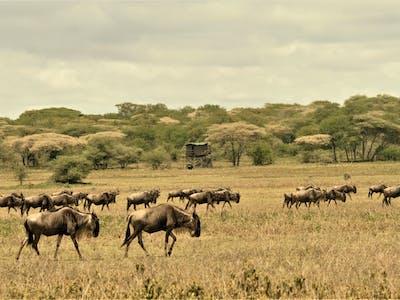 Bush Rover Migration Camp Kusini