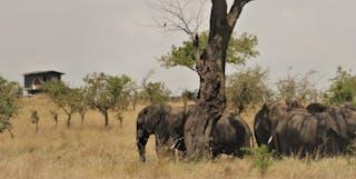 Bush Rover Elephants