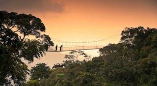 Canopy Walk Chimpanzee Tracking Nyungwe Forest National Park Rwanda 3