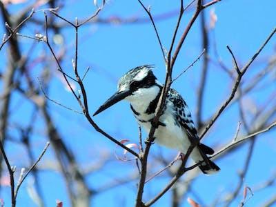 Caprivi Strip Birding