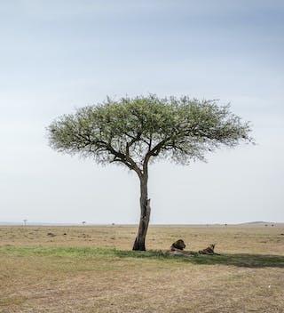 Masai Mara Wedding location - credit Cheka Photography