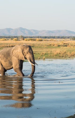 Chikwenya Elephant