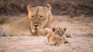 Chikwenya Lions