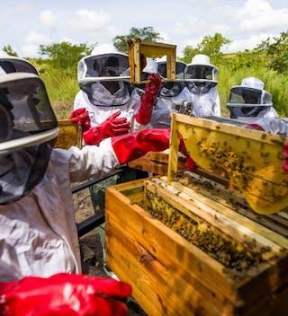Community Beekepers For Honey Production Cr Naude Heunis 18