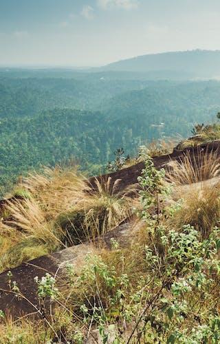 Crocodile Rock Plantation Walks