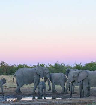 Sunset Elephant Viewing