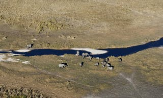 Wildlife from the Air