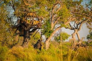 Delta Camp Treehouse 1