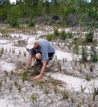 Derek Planting Tree @ Vohibola 1