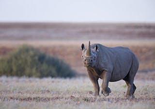 Desert Rhino Blog 1