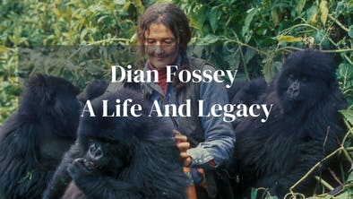 Dian Fossey Life Legacy
