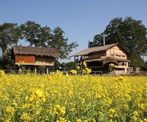 Diphlu River Lodge Mustard Fields