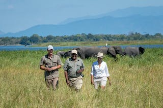 Discovering Elephants On A Safari From Kuthengo Camp