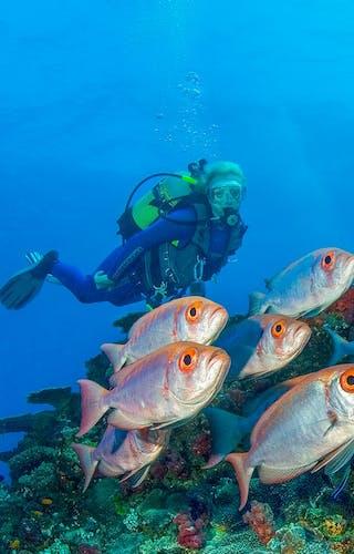 Diving At Azura Quilalea In The Quirimbas