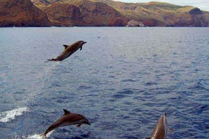 Dolphin Watching On St Helena