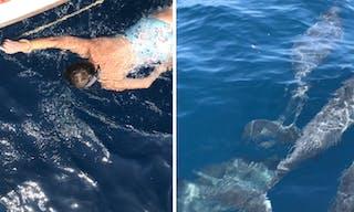 Dolphins Around Fanjove Island