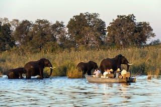 Duma Tau Camp Elephant Safari