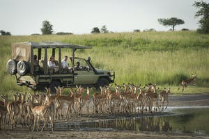 Dunia Camp Game Drive