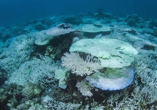 Dying Coral